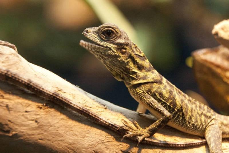 Exposición 'Reptiles y anfibios' en el Acuario de Gijón