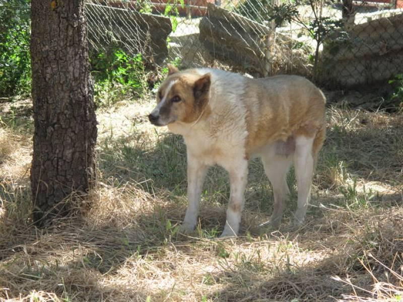 Irina, una perra tímida pero muy cariñosa, lleva desde 1999 en 'El refugio'