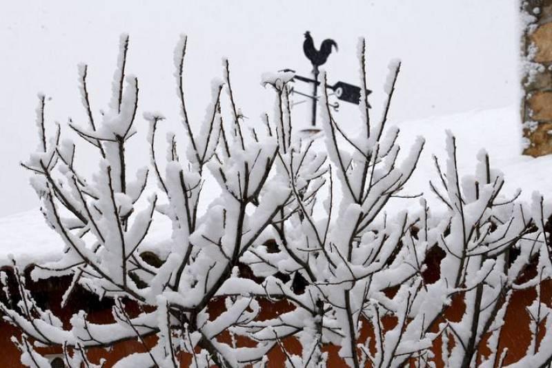 Detalle de unas ramas con nieve tomada en la localidad madrileña de Pedrezuela. La sierra de Madrid está en alerta naranja.