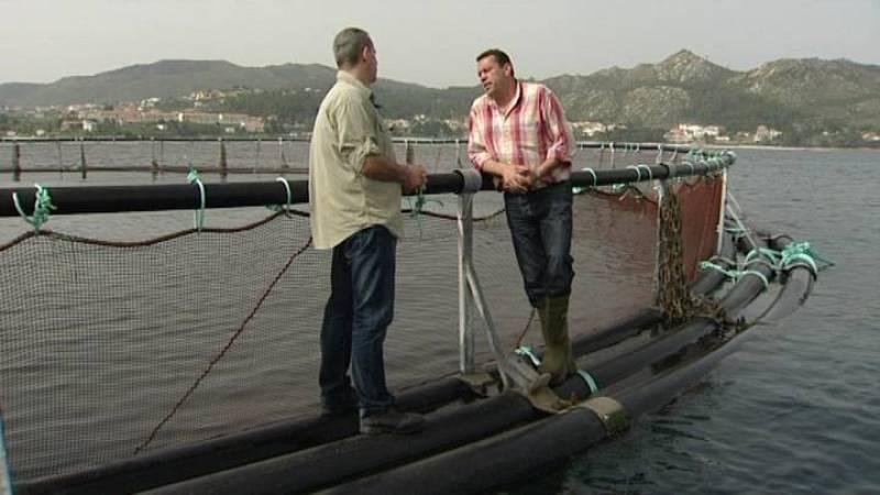 La empresa North West Food y la Conselleria del Mar insisten en que la acuicultura del salmón no contamina