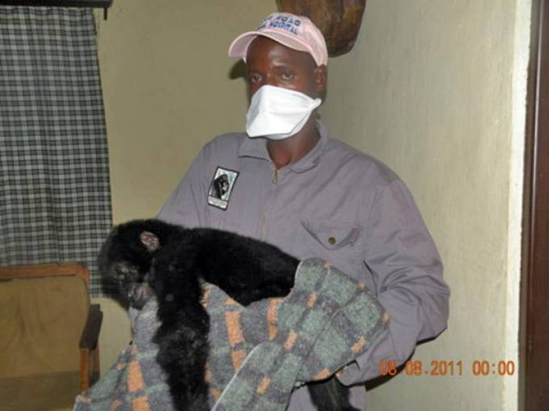 Uno de los veterinarios del parque sostiene al cachorro después de haber sido rescatado de la banda de cazadores furtivos que lo habían capturado