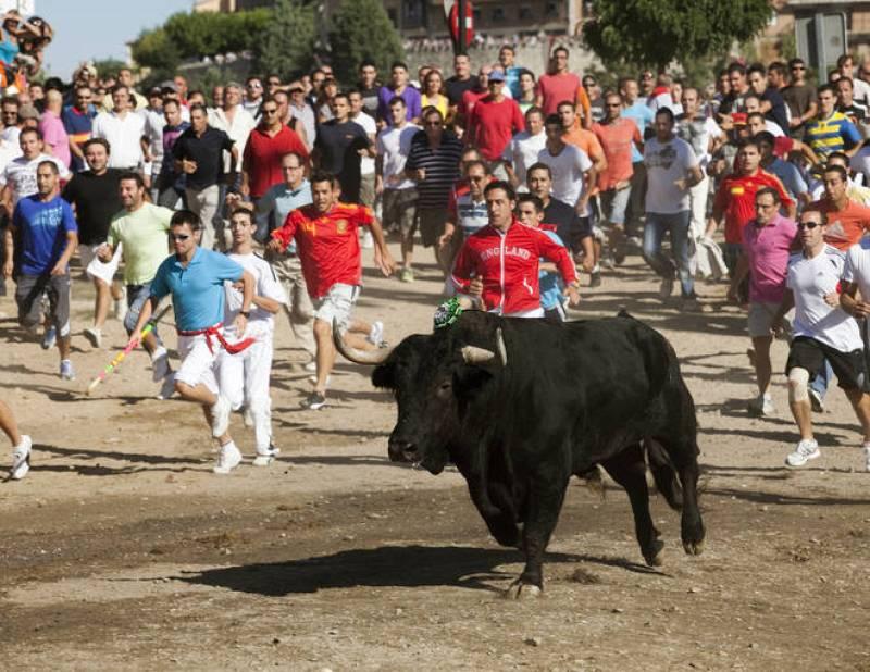 Decenas de personas participan en el tradicional Toro de la Vega de Tordesillas (Valladolid), fiesta que tiene su origen hace más de 500 años.