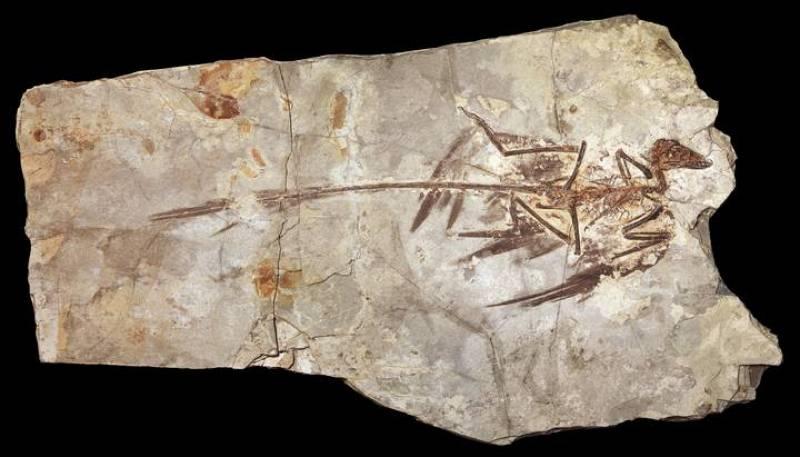 Uno de los ejemplares fósiles localizados en una región rocosa de China