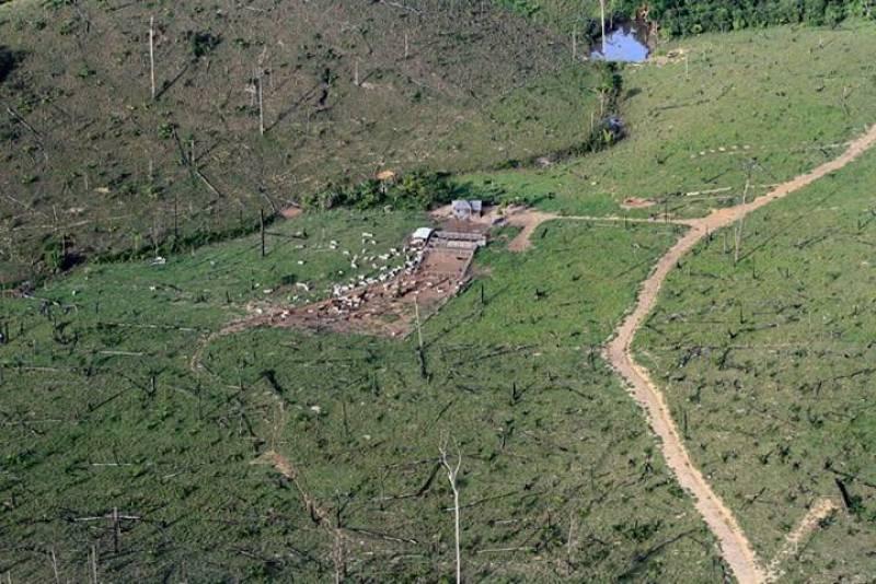 Desde que Dilma Rousseff asumió el cargo de presidente se ha reducido la protección de la selva