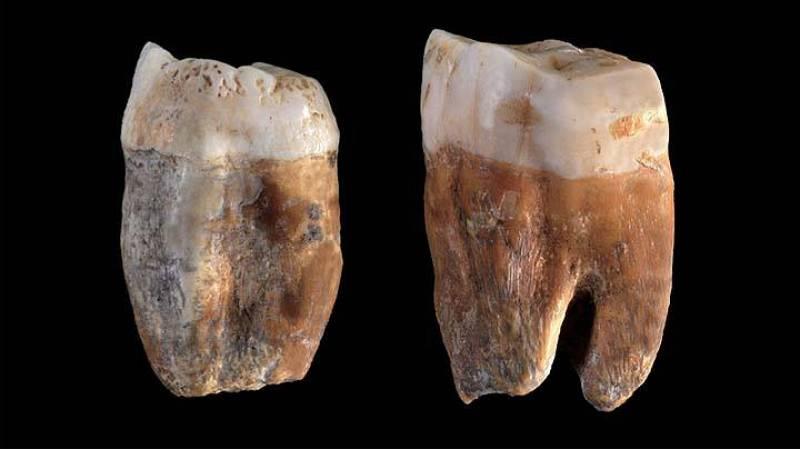 Los primeros fósiles humanos encontrados en Pinilla fueron dos molares de neandertales