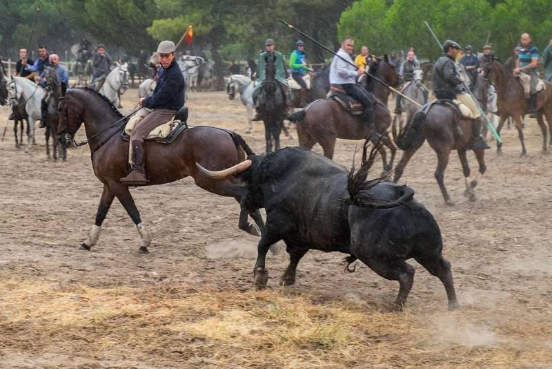 Tordesillas celebra su primer toro de la pe a 6 - Sergio vega fotografo ...