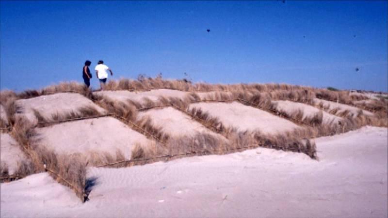 Empalizadas ortogonales de la restauración del primer cordón dunar