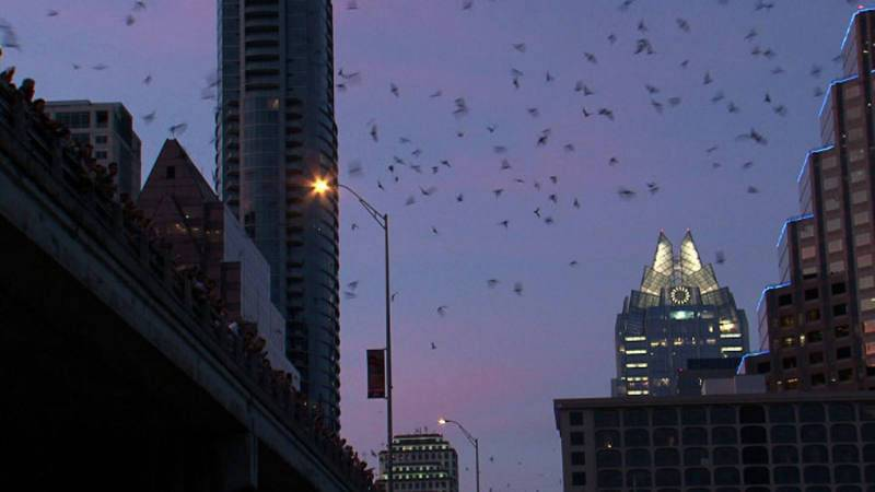 Murciélagos saliendo de un puente en Austin, Texas (EEUU)
