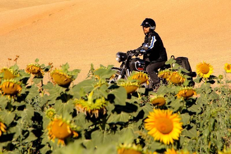 En primavera el campo español restalla de color abriendo los girasoles