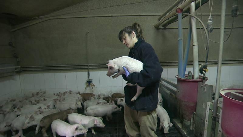 Visitamos una granja para conocer el uso de antibióticos en ganadería