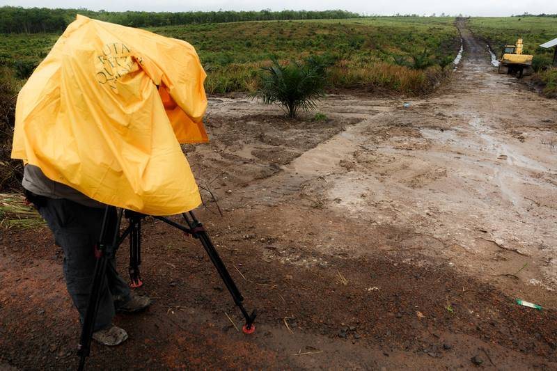 Campo deforestado listo para su explotación