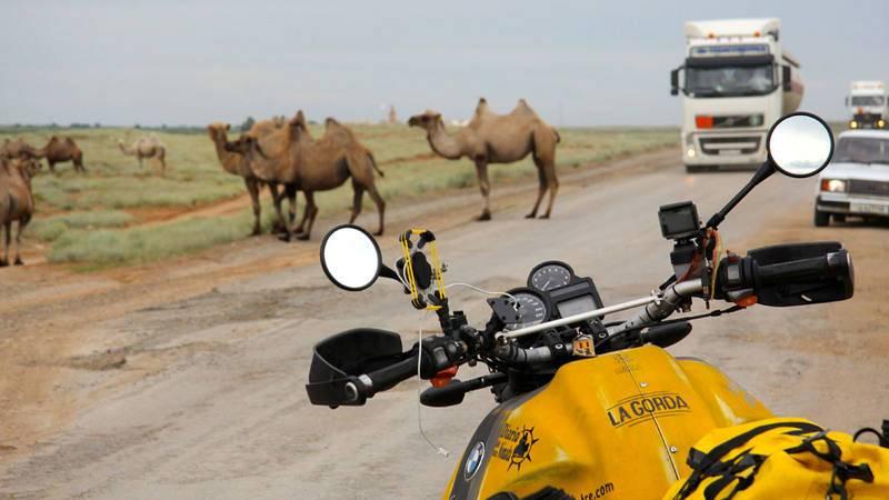 Kazajistán. Camellos invadiendo la carretera kazaja. La naturaleza imponiéndose sobre el paso del hombre
