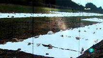 Ir al VideoLa 2 Noticias - Bigas Luna, la creación plástica como salvación