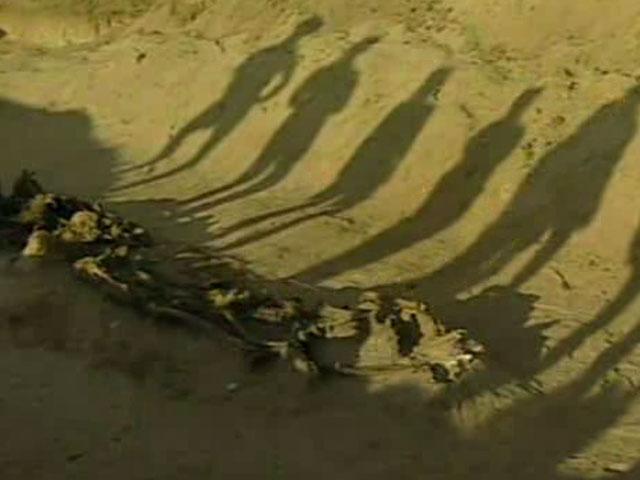 """2004 - """"Las fosas del olvido"""""""