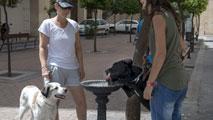 Ir al VideoEl abandono de perros aumenta en verano, el año pasado se recogieron 107.000