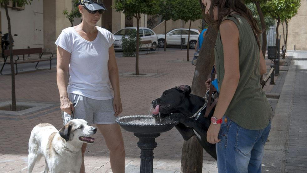 El abandono de perros aumenta en verano, el año pasado se recogieron 107.000