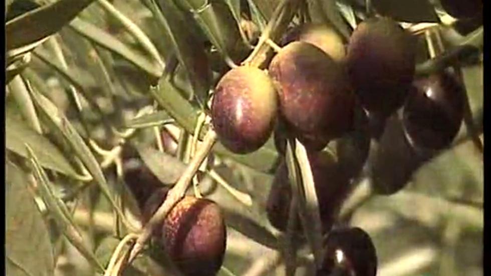 A pedir de boca - Aceite de oliva DO. Baena