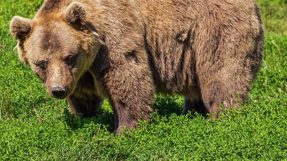Acompañamos a una patrulla de vigilancia del oso pardo