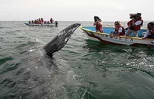 Las ballenas amenazadas por el cambio climático y el narcotráfico