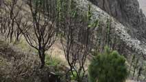Ir al VideoUn año del incendio de La Gomera