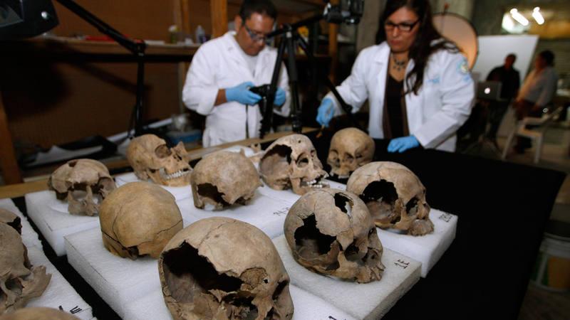Antropólogos mexicanos estudian un conjunto de cráneos hallados en Ciudad de México