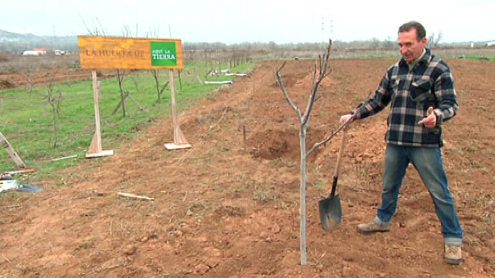 C mo se plantan los rboles frutales - Cuando se plantan los arboles frutales ...