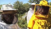 La tribu de los apicultores