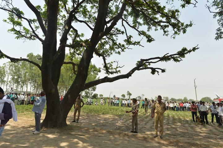 Árbol donde aparecieron ahorcadas las dos adolescentes en el estado de Uttar Pradesh (India)
