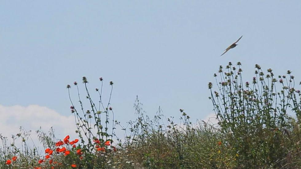 Aquí la tierra - Arcoiris en el cielo
