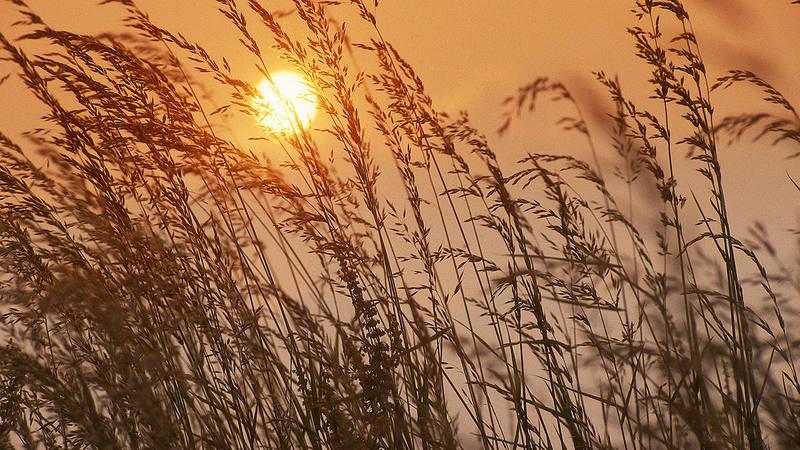 El aumento de temperaturas reducirá la producción de trigo, arroz, maíz y soja