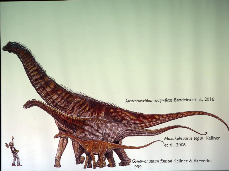 Austroposeidon magníficus, dinosaurio de 25 metros descubierto en Brasil 1475687532999
