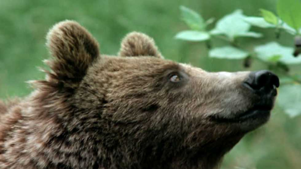 El hombre y la Tierra (Fauna ibérica) - Al borde de la extinción, 1