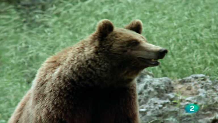 El hombre y la Tierra (Fauna ibérica) - Al borde de la extinción, 2
