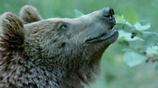 El hombre y la Tierra (Fauna ibérica) - Al borde de la extinción, 3