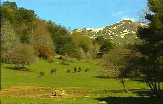 España Directo - El bosque de Piedrahita de Jaca