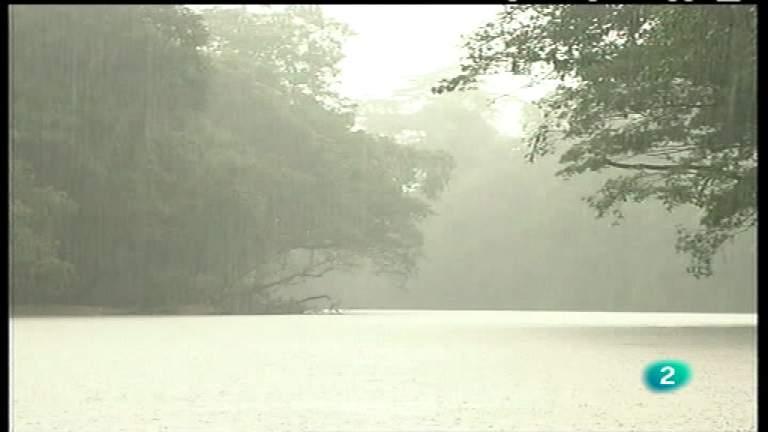 El bosque protector - El bosque tropical. Un paraíso en peligro