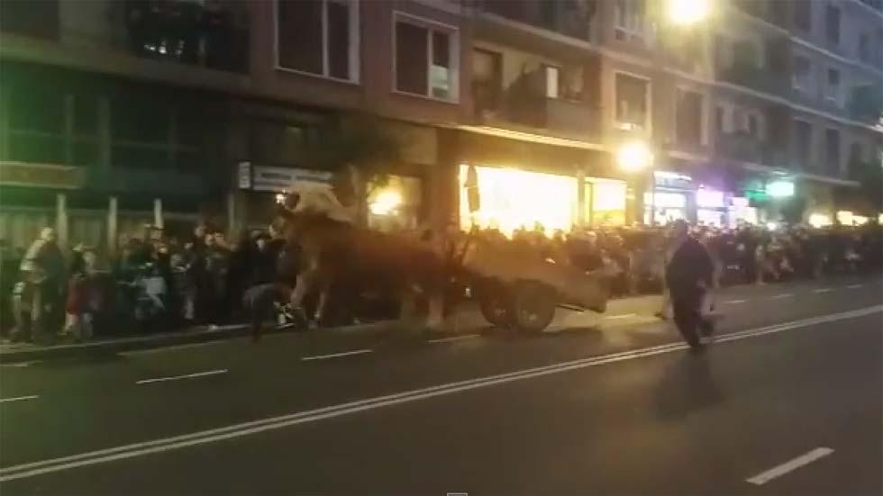 Unos bueyes desbocados causan pánico en la cabalgata de Reyes de Portugalete