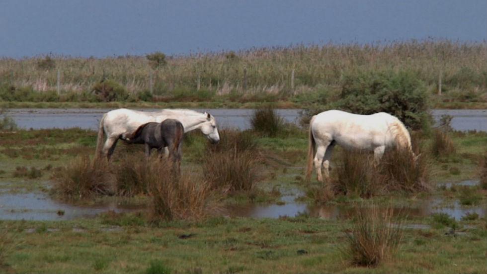 Aquí la tierra - Caballos de agua