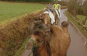 España Directo - El Camino en camello