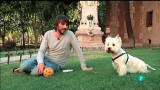 Más que perros y gatos - Capítulo 1