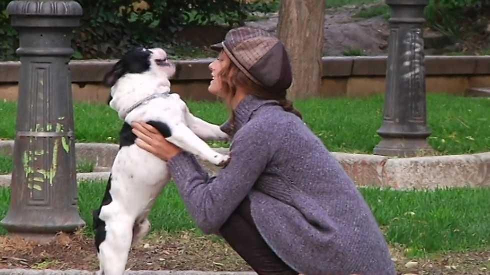 Más que perros y gatos - Capítulo 11