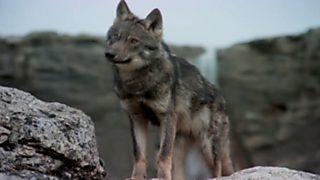 El hombre y la Tierra (Fauna ibérica) - El cazador social