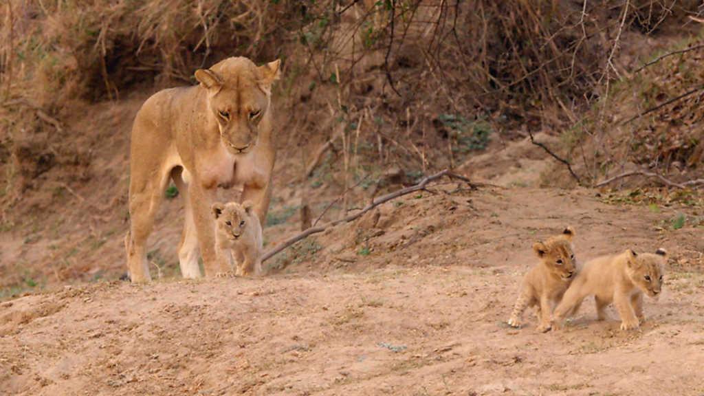 Grandes documentales - Cazadores de África: El inadaptado