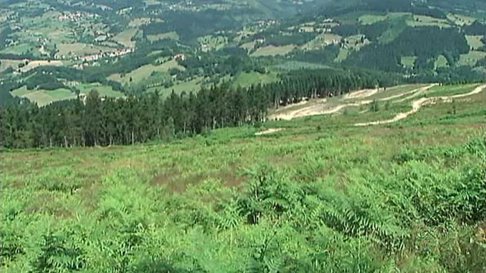 """El bosque protector - Celulosa. El  """"papel"""" del bosque"""