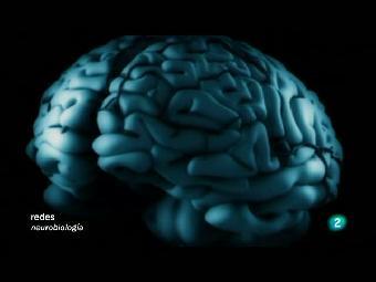 Redes - El cerebro masculino
