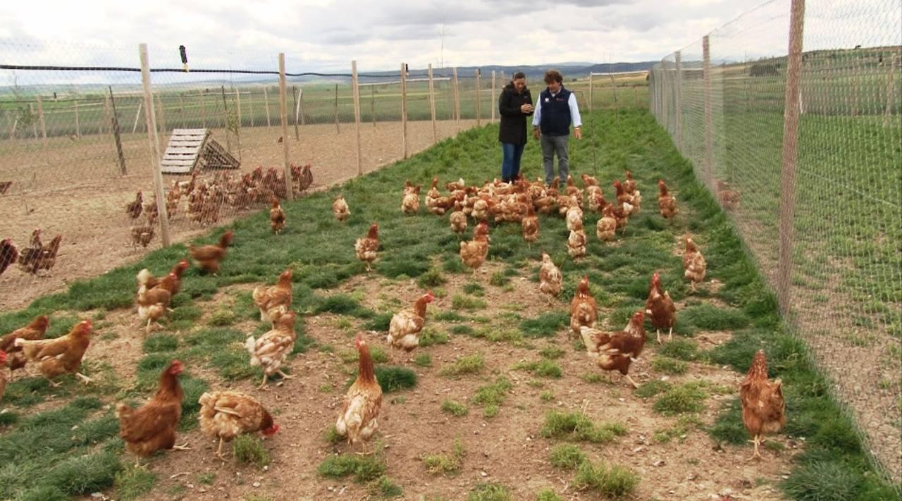 ... huevos rancheros huevos ree os recipes dishmaps huevos ree os recipes