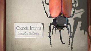 El escarabajo verde - Ciencia infinita. Cibertaxonomía