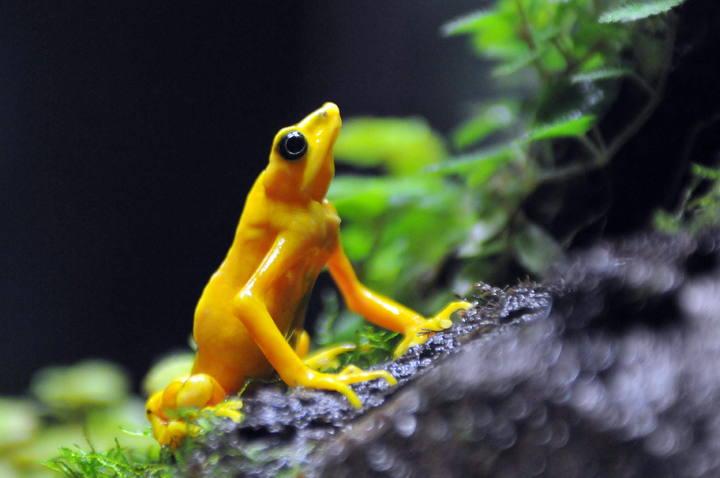 Científicos alertan de que el planeta sufre la sexta ola de extinción masiva de fauna