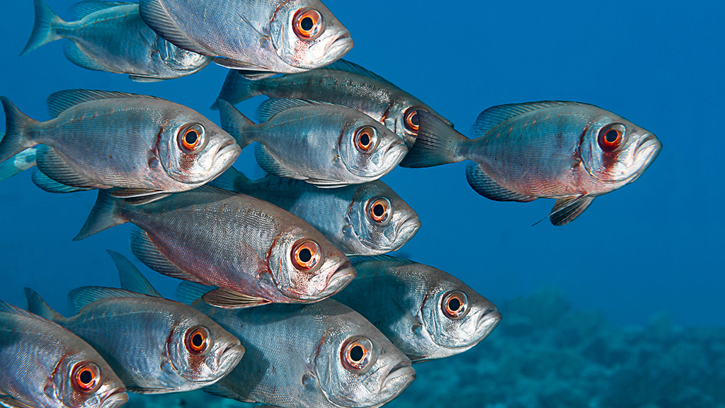 La ciguatera, el 'nuevo anisakis', llega a los pescados que consumimos en Europa