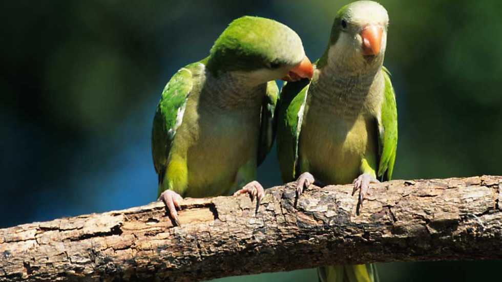 El escarabajo verde - Ciudadano pájaro